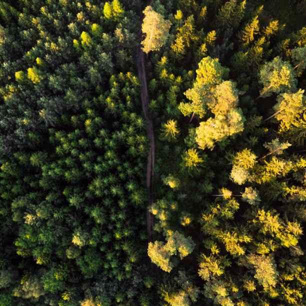 Dekarbonisieren – aber richtig: CO2 vermeiden, kompensieren oder entziehen?