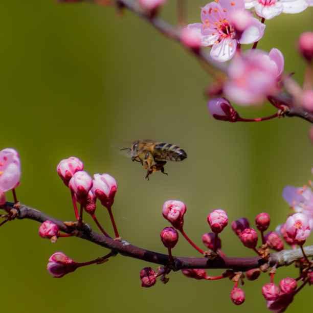 Triodos Bank unterzeichnet Versprechen zur Finanzierung der Biodiversität